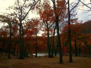 Fall rainbow of trees