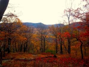 Foliage on trail