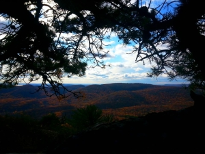 Hills through trees